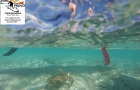 SUP Provo guided paddle board tours in the Turks and Caicos Islands turtle time3 with SUP Provo logo