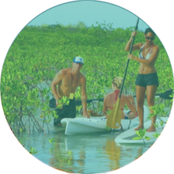 Eco Guided Tours (Kayak or Stand Up Paddle Board)